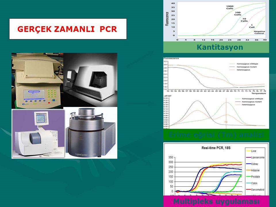 GERÇEK ZAMANLI PCR Kantitasyon Erime eğrisi (Tm) analizi