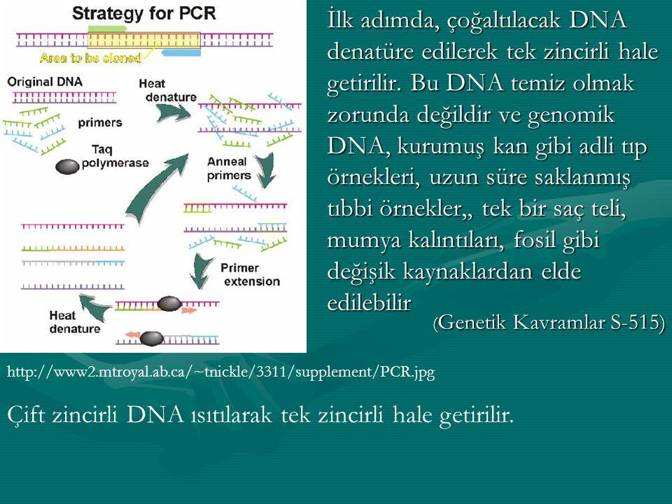 Çift zincirli DNA ısıtılarak tek zincirli hale getirilir.