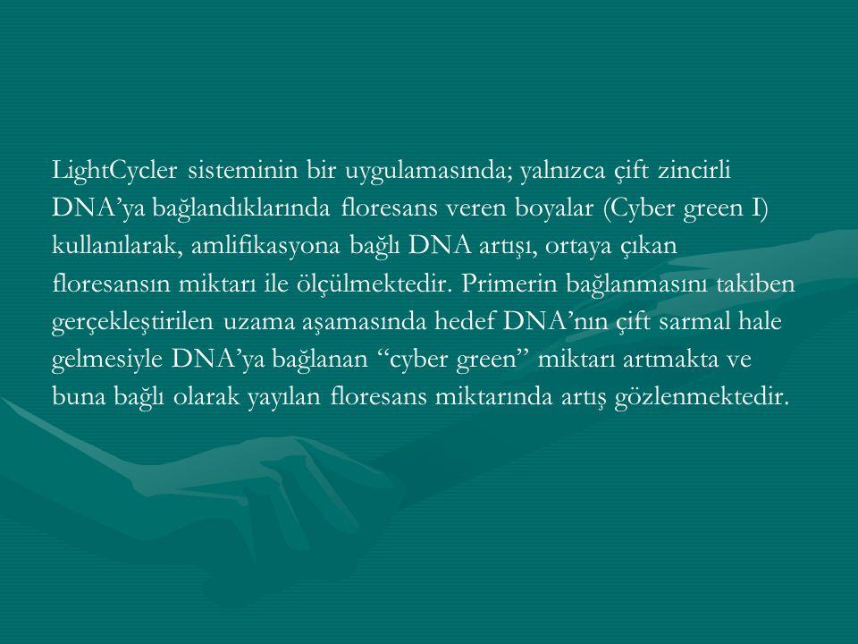 LightCycler sisteminin bir uygulamasında; yalnızca çift zincirli