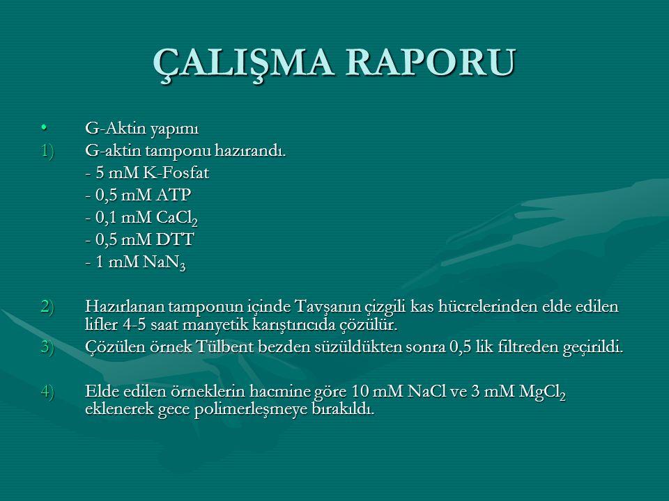 ÇALIŞMA RAPORU G-Aktin yapımı G-aktin tamponu hazırandı.