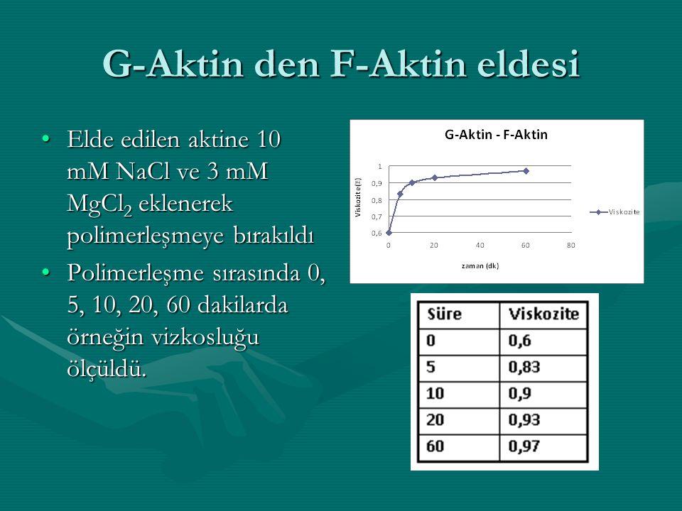 G-Aktin den F-Aktin eldesi