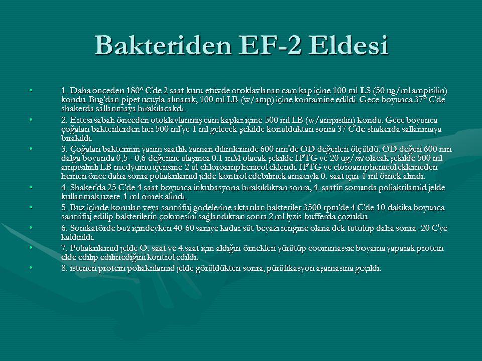 Bakteriden EF-2 Eldesi