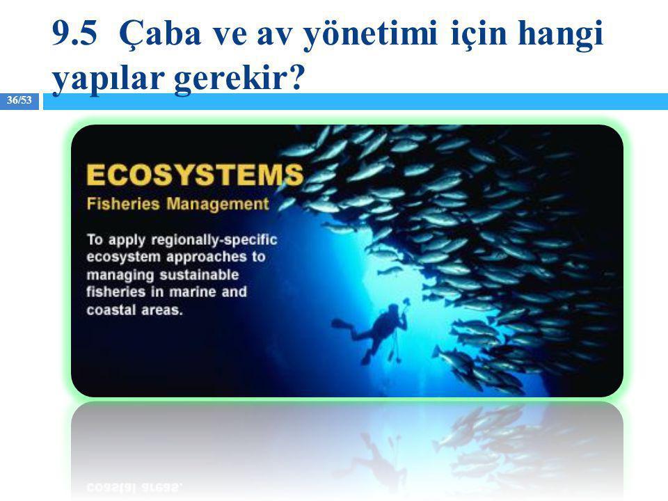 9.5 Çaba ve av yönetimi için hangi yapılar gerekir
