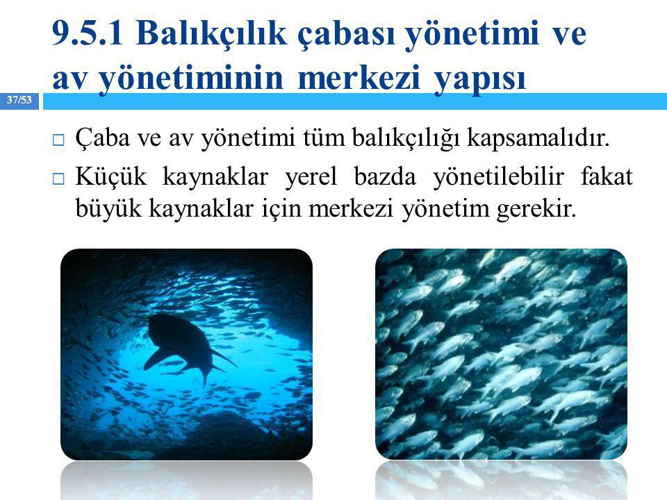 9.5.1 Balıkçılık çabası yönetimi ve av yönetiminin merkezi yapısı