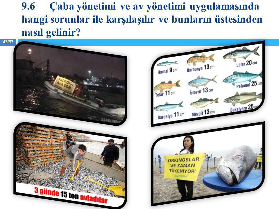 9.6 Çaba yönetimi ve av yönetimi uygulamasında hangi sorunlar ile karşılaşılır ve bunların üstesinden nasıl gelinir