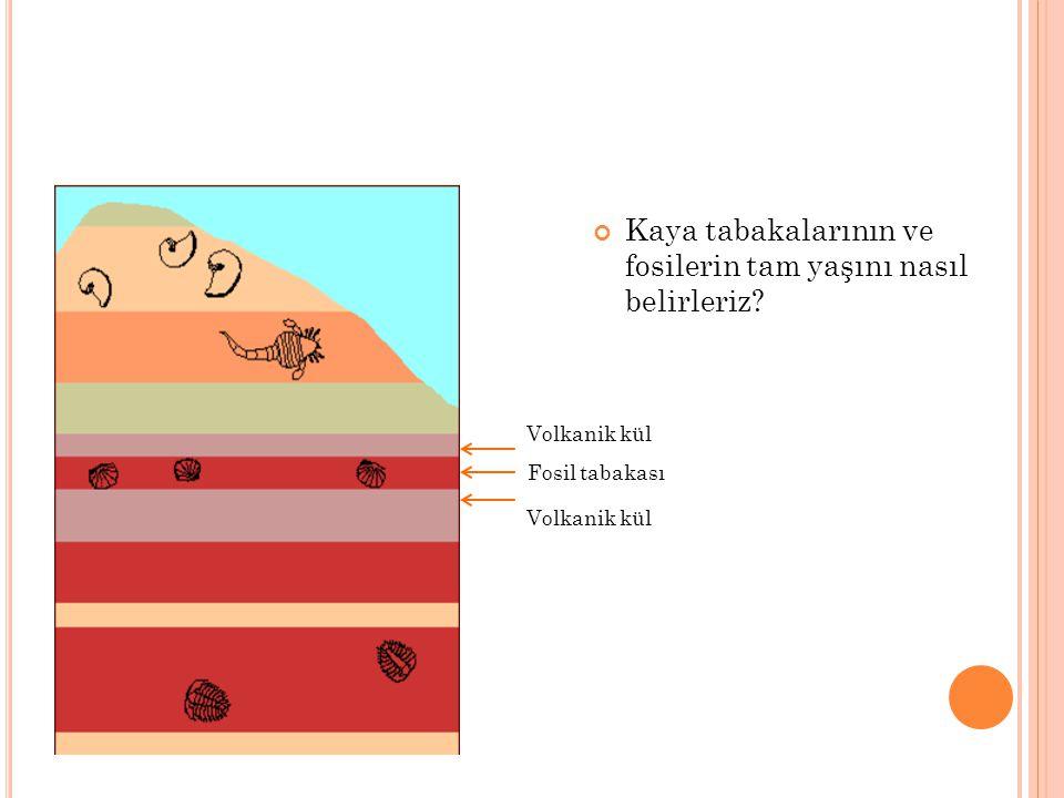 Kaya tabakalarının ve fosilerin tam yaşını nasıl belirleriz