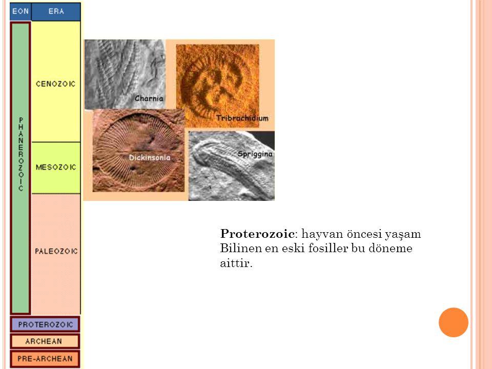 Proterozoic: hayvan öncesi yaşam