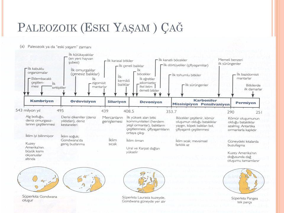 Paleozoik (Eski Yaşam ) Çağ