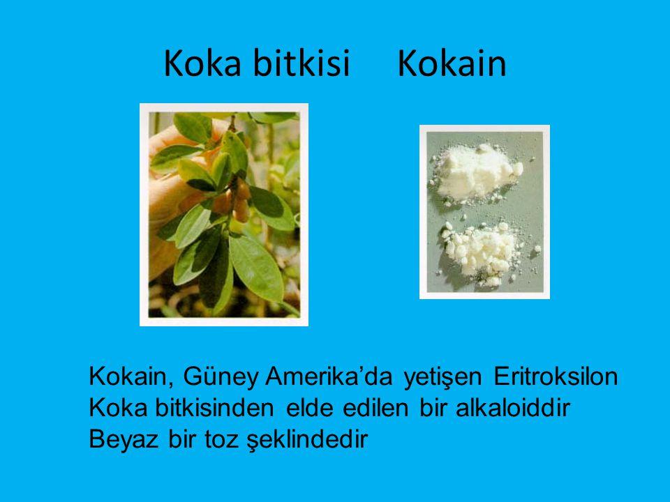 Koka bitkisi Kokain Kokain, Güney Amerika'da yetişen Eritroksilon Koka bitkisinden elde edilen bir alkaloiddir.