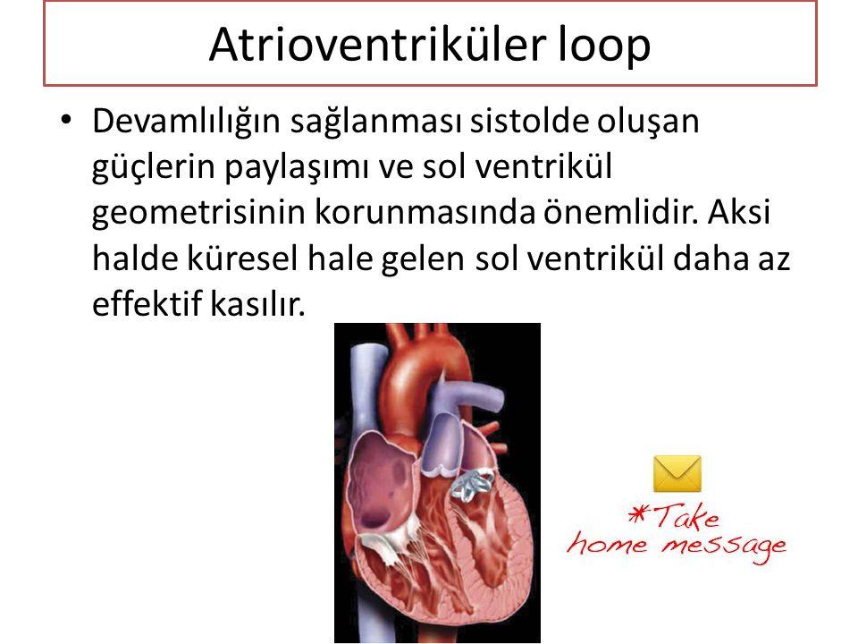 Atrioventriküler loop