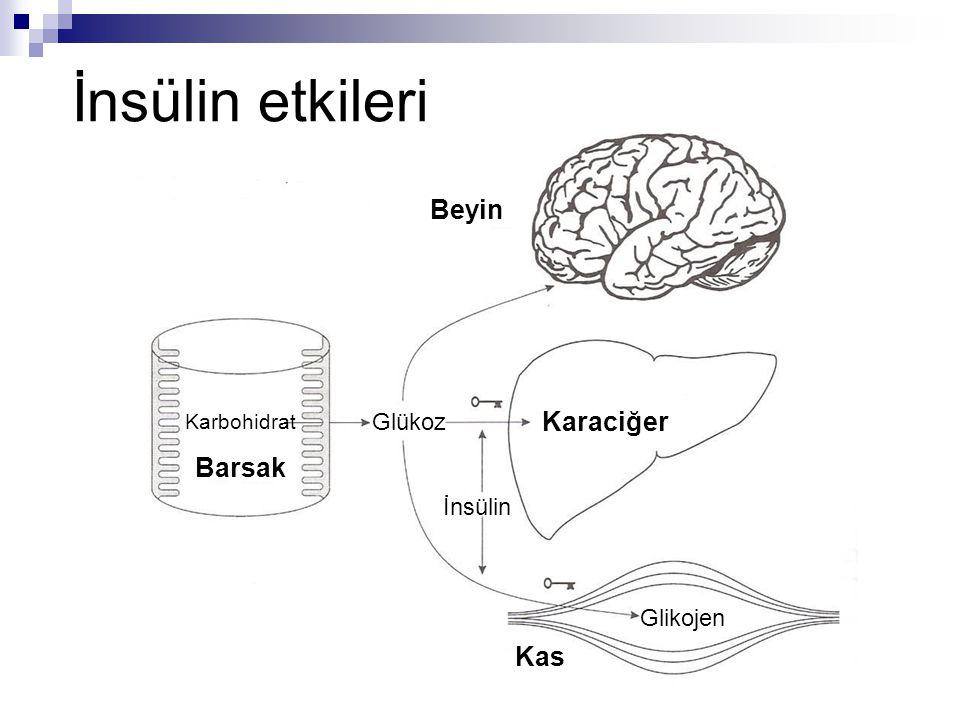 İnsülin etkileri Beyin Karaciğer Barsak Kas Glükoz İnsülin Glikojen