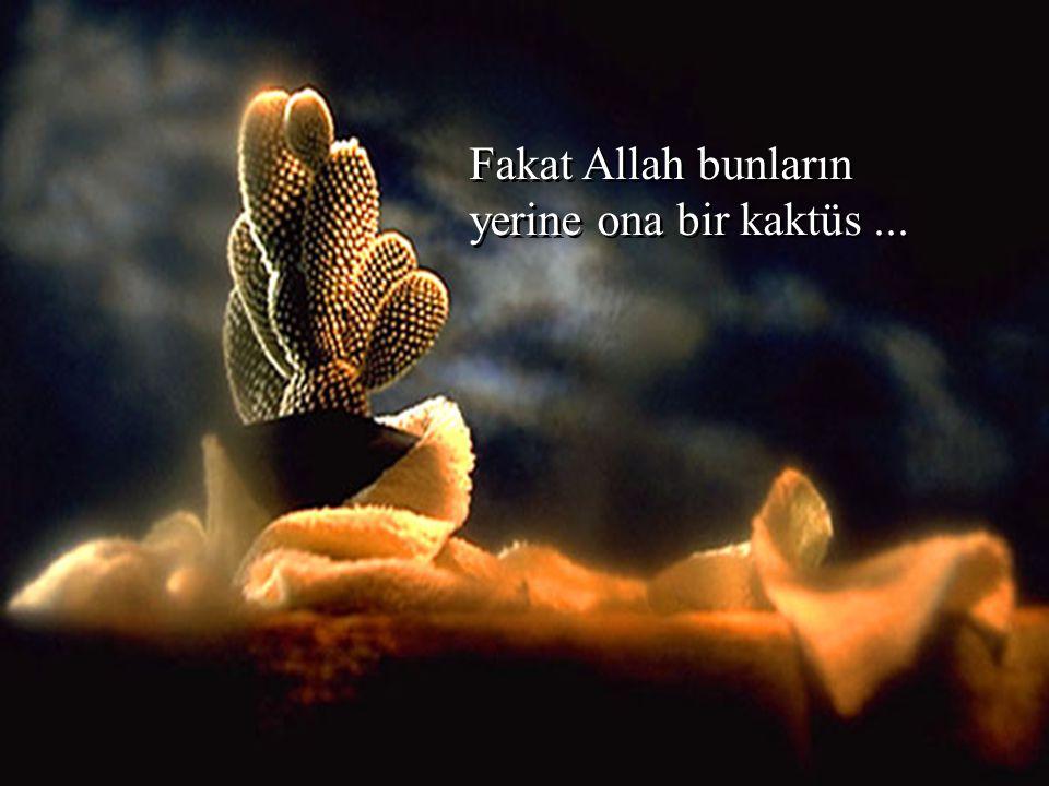 Fakat Allah bunların yerine ona bir kaktüs ...
