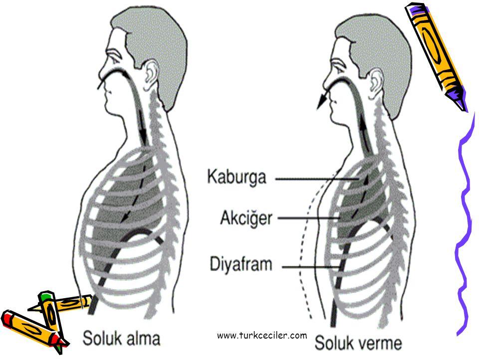 www.turkceciler.com
