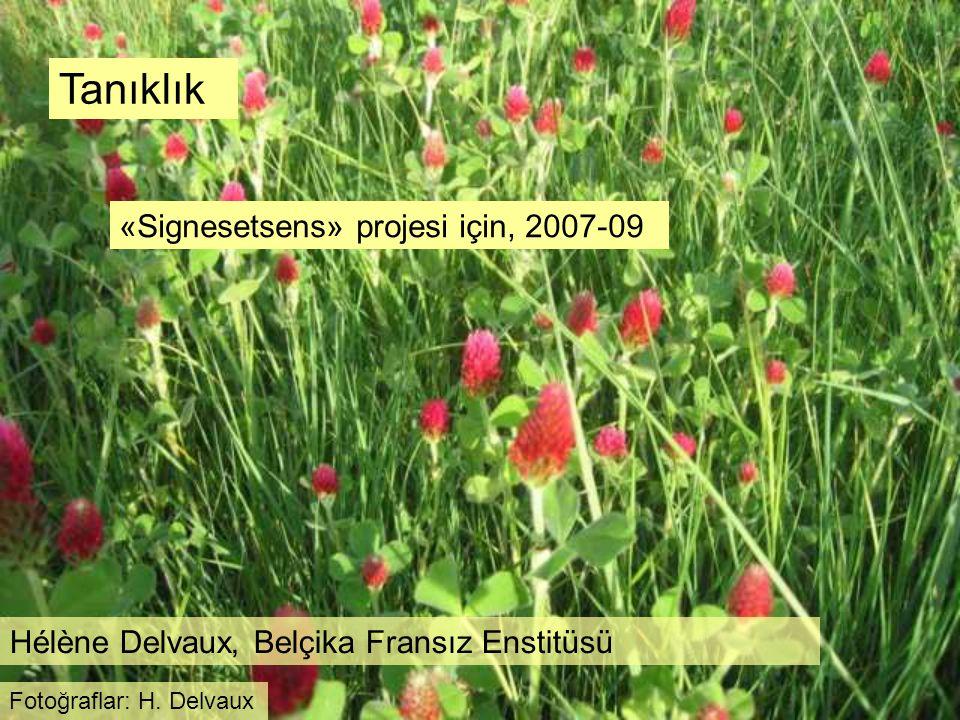 Tanıklık «Signesetsens» projesi için, 2007-09