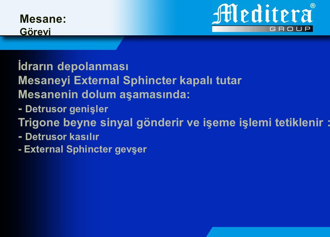 Mesaneyi External Sphincter kapalı tutar Mesanenin dolum aşamasında: