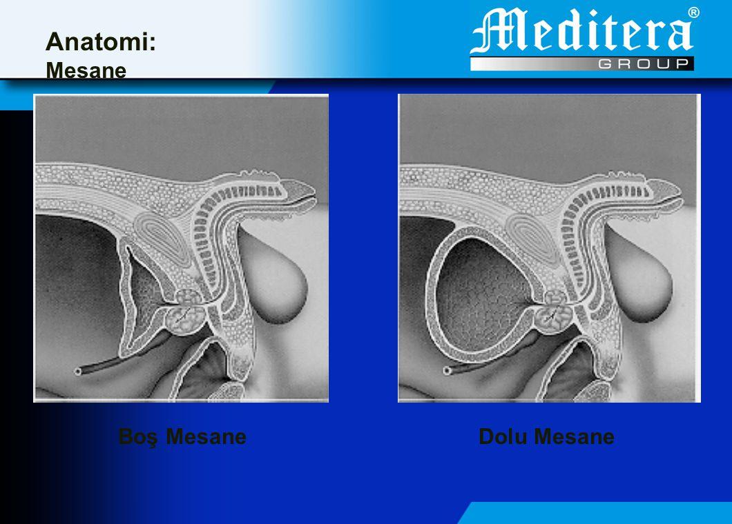 Anatomi: Mesane Boş Mesane Dolu Mesane