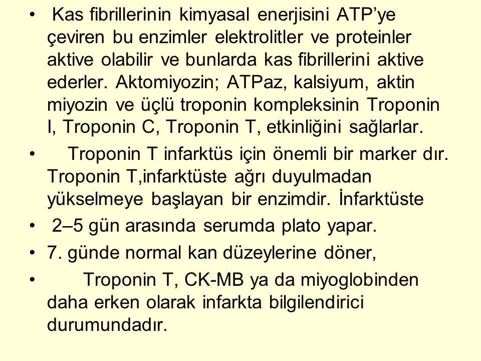 Kas fibrillerinin kimyasal enerjisini ATP'ye çeviren bu enzimler elektrolitler ve proteinler aktive olabilir ve bunlarda kas fibrillerini aktive ederler. Aktomiyozin; ATPaz, kalsiyum, aktin miyozin ve üçlü troponin kompleksinin Troponin I, Troponin C, Troponin T, etkinliğini sağlarlar.