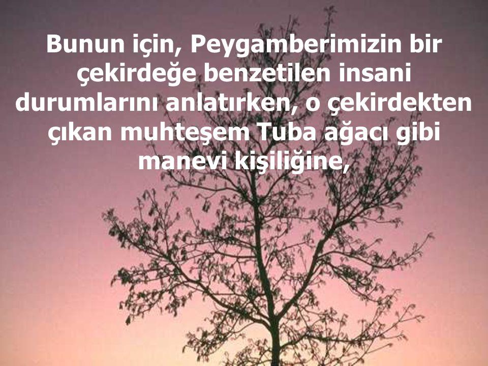 Bunun için, Peygamberimizin bir çekirdeğe benzetilen insani durumlarını anlatırken, o çekirdekten çıkan muhteşem Tuba ağacı gibi manevi kişiliğine,