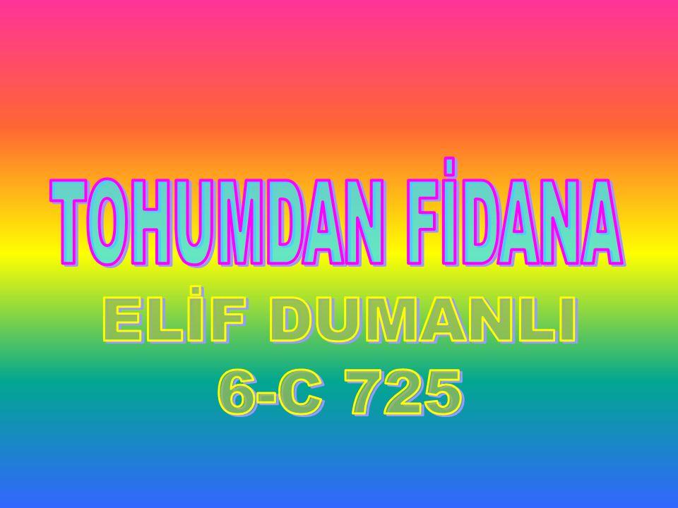 TOHUMDAN FİDANA ELİF DUMANLI 6-C 725
