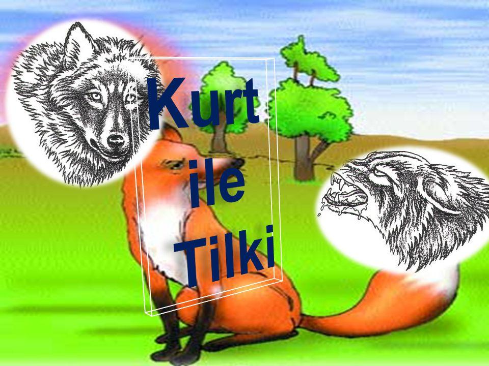 Kurt ile Tilki