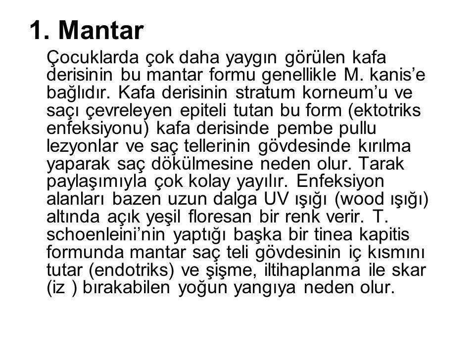 1. Mantar