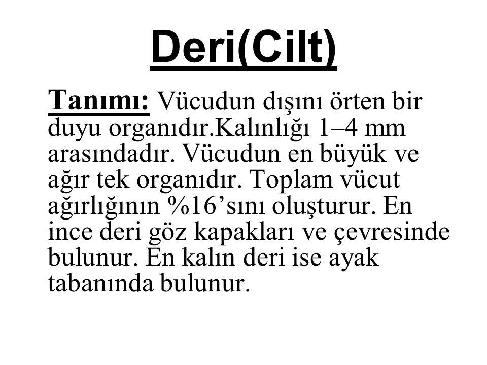 Deri(Cilt)