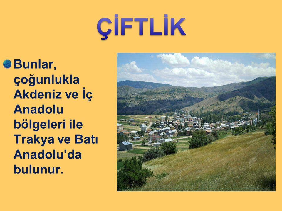 ÇİFTLİK Bunlar, çoğunlukla Akdeniz ve İç Anadolu bölgeleri ile Trakya ve Batı Anadolu'da bulunur.