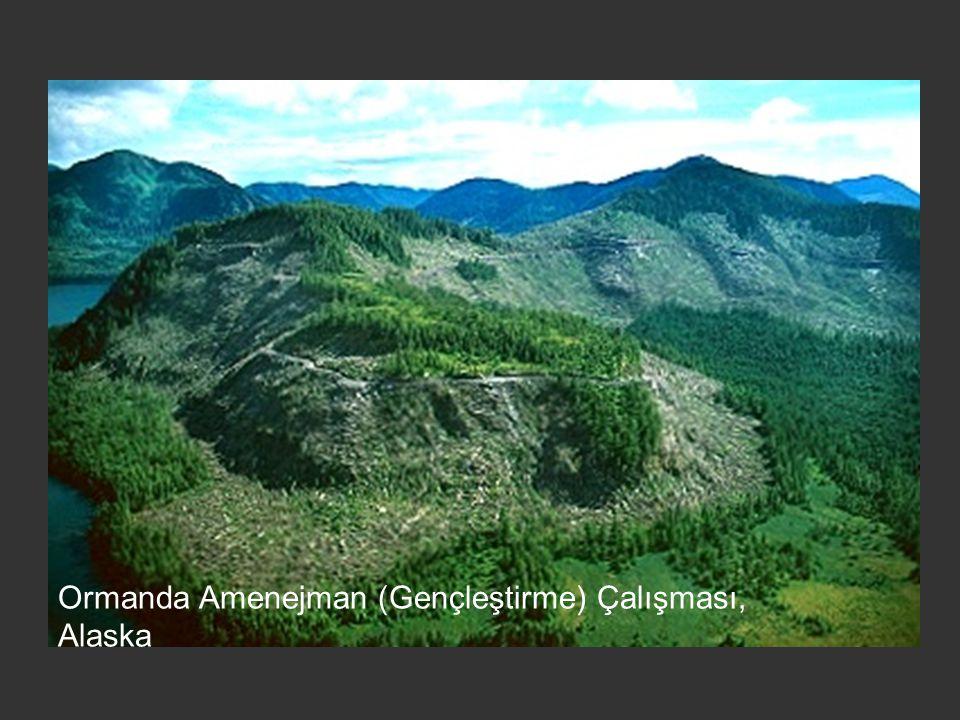 Ormanda Amenejman (Gençleştirme) Çalışması, Alaska