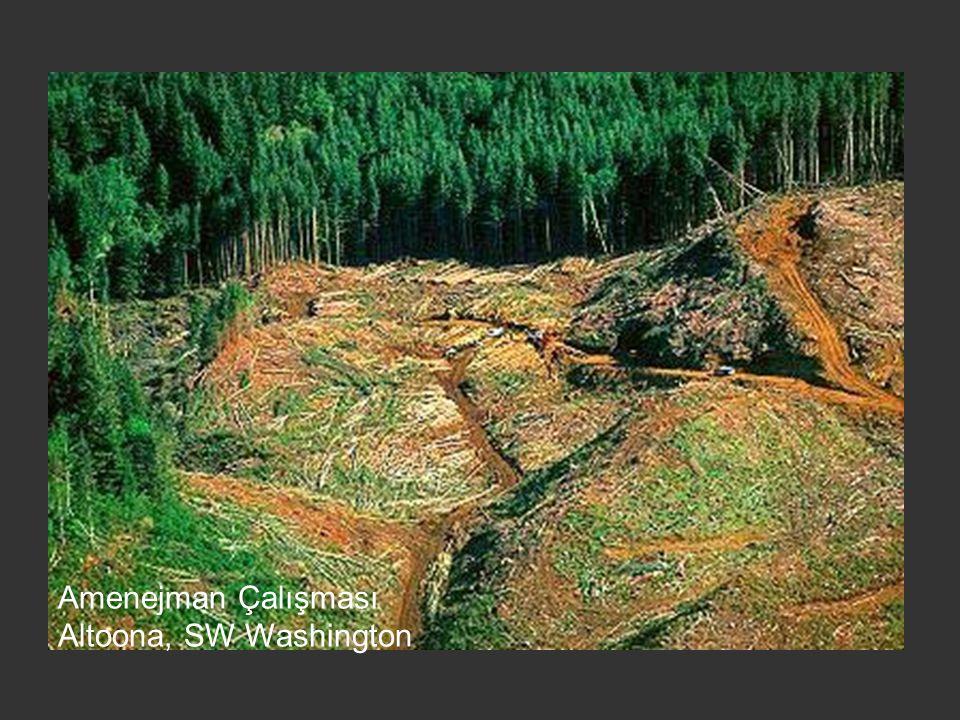 Amenejman Çalışması Altoona, SW Washington