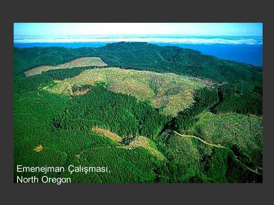 Emenejman Çalışması, North Oregon
