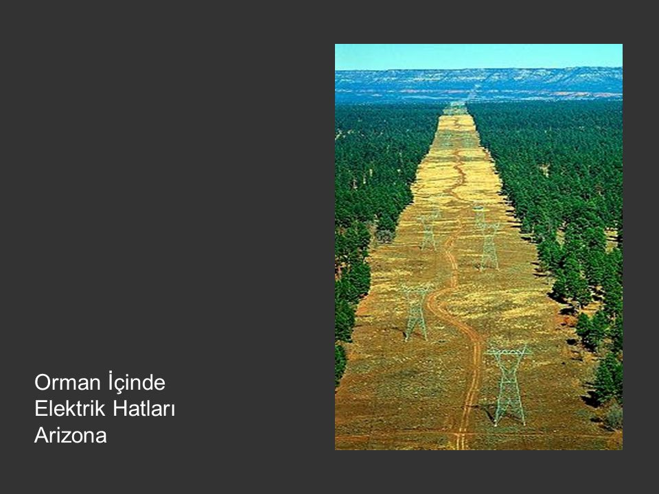 Orman İçinde Elektrik Hatları Arizona