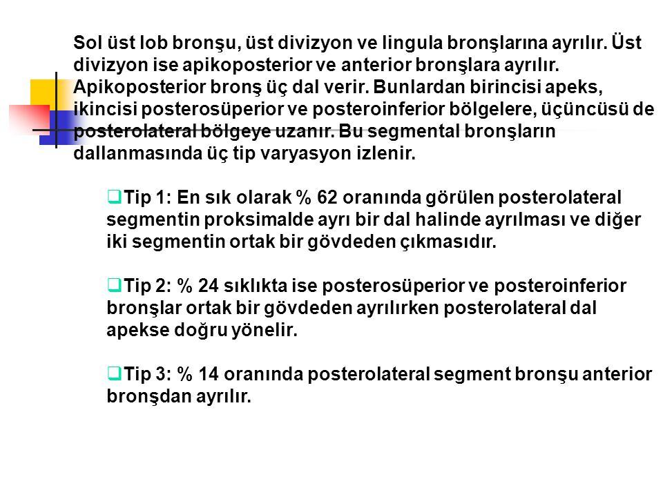 Sol üst lob bronşu, üst divizyon ve lingula bronşlarına ayrılır