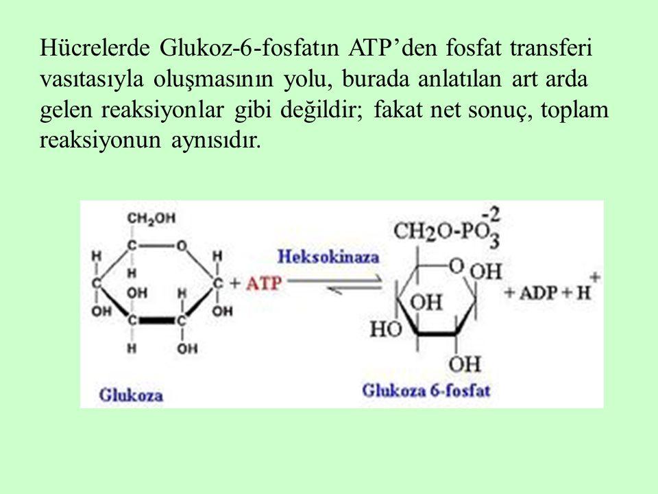 Hücrelerde Glukoz-6-fosfatın ATP'den fosfat transferi vasıtasıyla oluşmasının yolu, burada anlatılan art arda gelen reaksiyonlar gibi değildir; fakat net sonuç, toplam reaksiyonun aynısıdır.