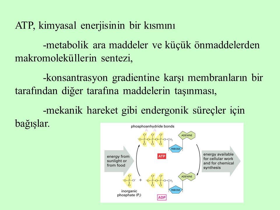 ATP, kimyasal enerjisinin bir kısmını