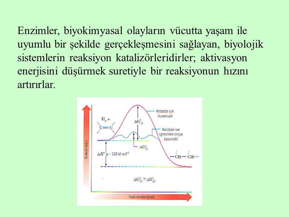 Enzimler, biyokimyasal olayların vücutta yaşam ile uyumlu bir şekilde gerçekleşmesini sağlayan, biyolojik sistemlerin reaksiyon katalizörleridirler; aktivasyon enerjisini düşürmek suretiyle bir reaksiyonun hızını artırırlar.