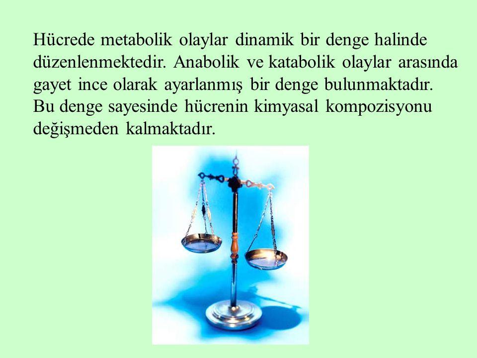 Hücrede metabolik olaylar dinamik bir denge halinde düzenlenmektedir
