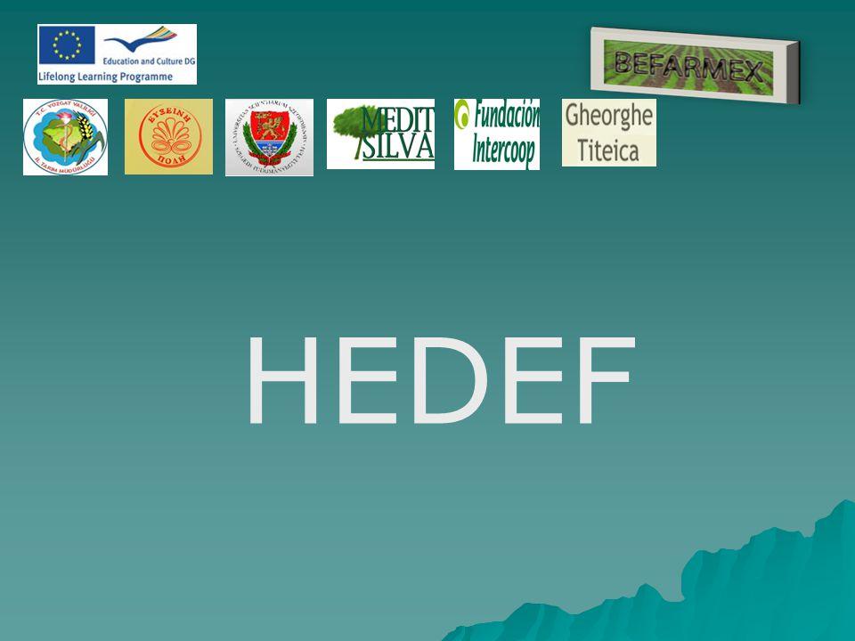 HEDEF