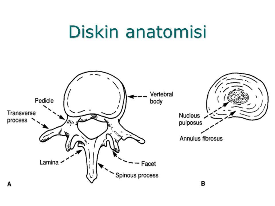 Diskin anatomisi