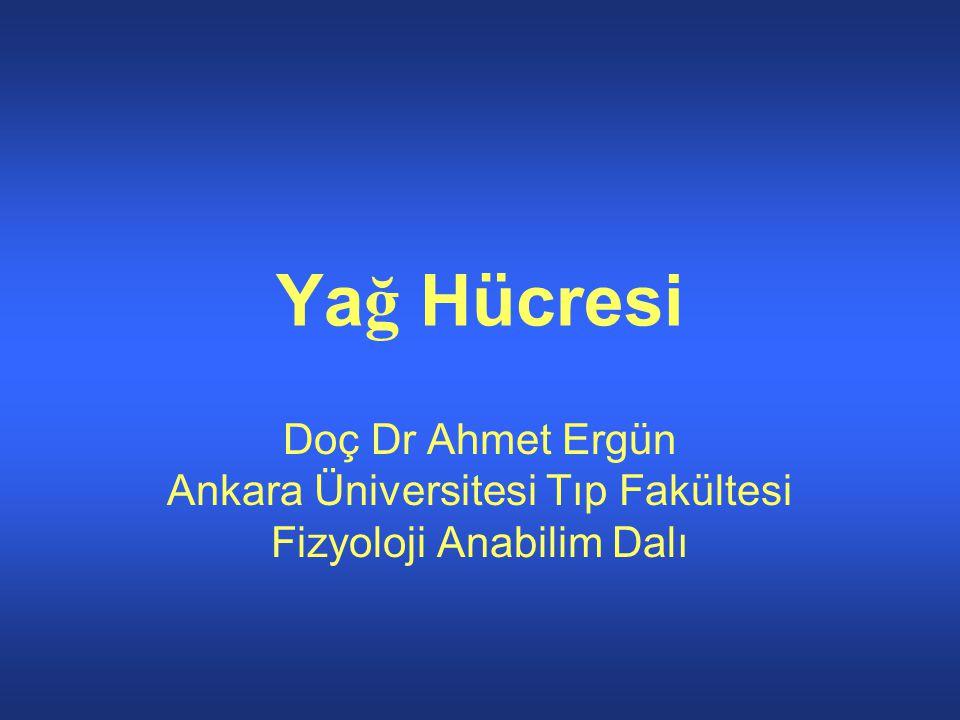 Yağ Hücresi Doç Dr Ahmet Ergün Ankara Üniversitesi Tıp Fakültesi Fizyoloji Anabilim Dalı