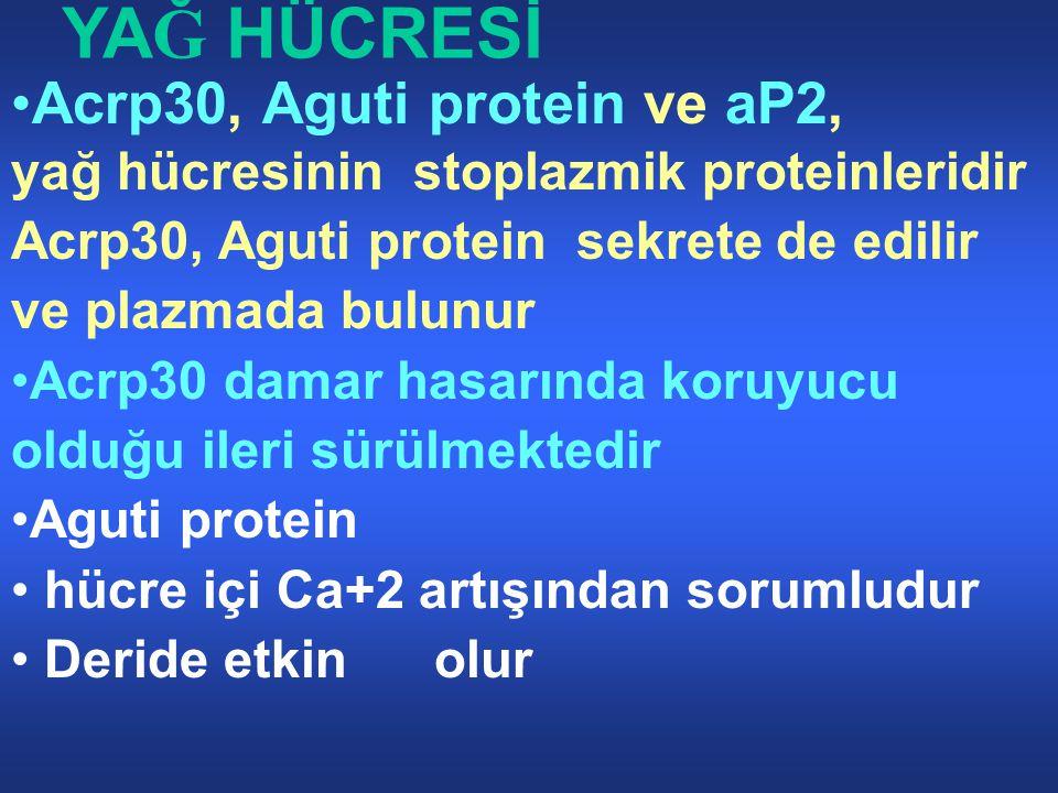 YAĞ HÜCRESİ Acrp30, Aguti protein ve aP2,