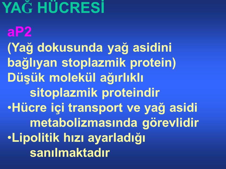 YAĞ HÜCRESİ aP2. (Yağ dokusunda yağ asidini bağlıyan stoplazmik protein) Düşük molekül ağırlıklı sitoplazmik proteindir.