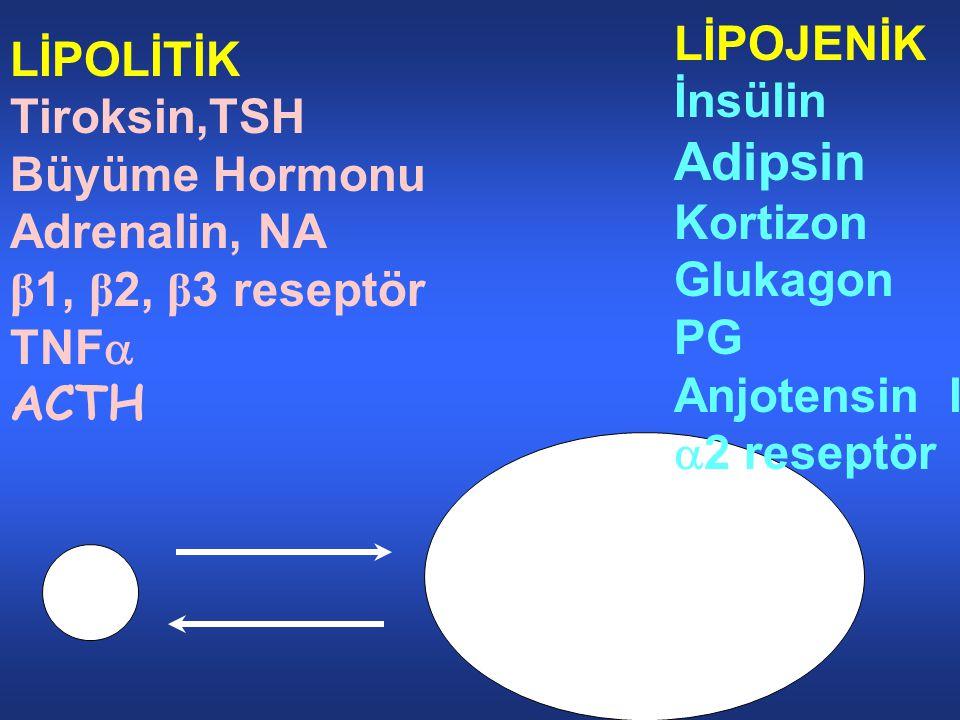 Adipsin LİPOJENİK LİPOLİTİK İnsülin Tiroksin,TSH Büyüme Hormonu