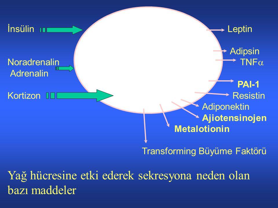 Yağ hücresine etki ederek sekresyona neden olan bazı maddeler