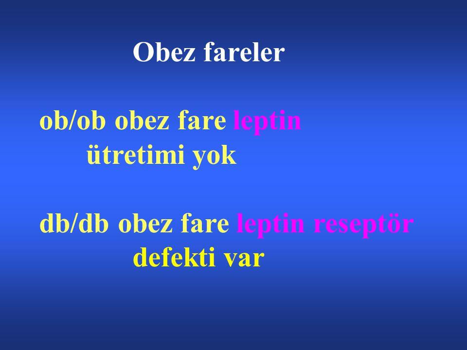 Obez fareler ob/ob obez fare leptin ütretimi yok db/db obez fare leptin reseptör defekti var