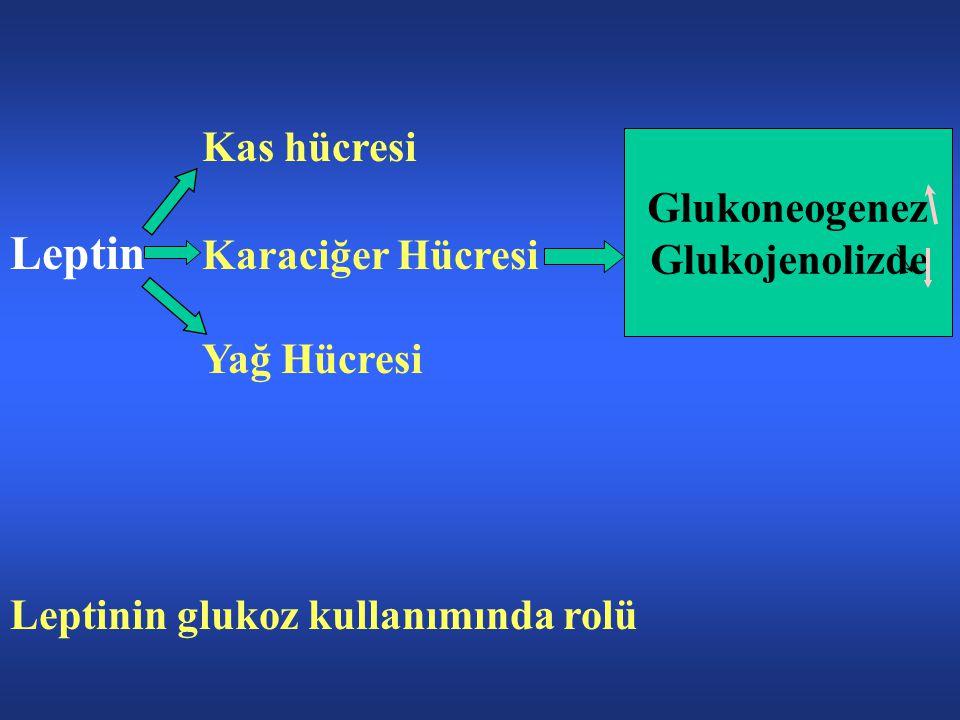 Leptin Karaciğer Hücresi