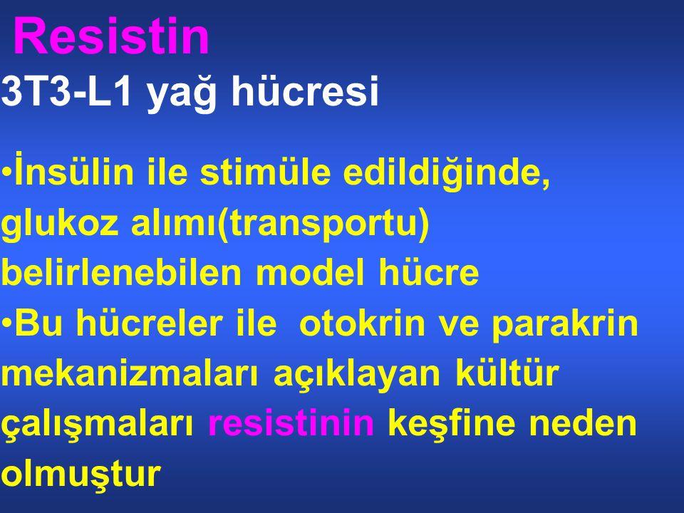 Resistin 3T3-L1 yağ hücresi