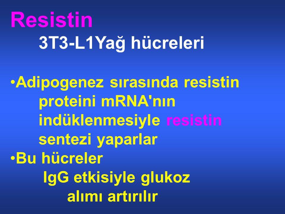 Resistin 3T3-L1Yağ hücreleri