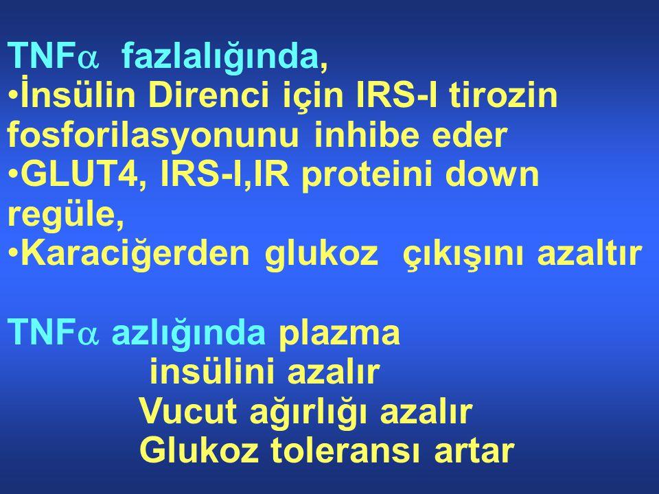 TNFa fazlalığında, İnsülin Direnci için IRS-I tirozin fosforilasyonunu inhibe eder. GLUT4, IRS-I,IR proteini down regüle,
