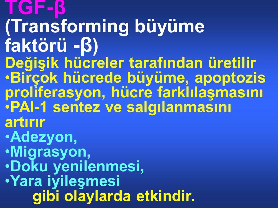 TGF-β (Transforming büyüme faktörü -β)