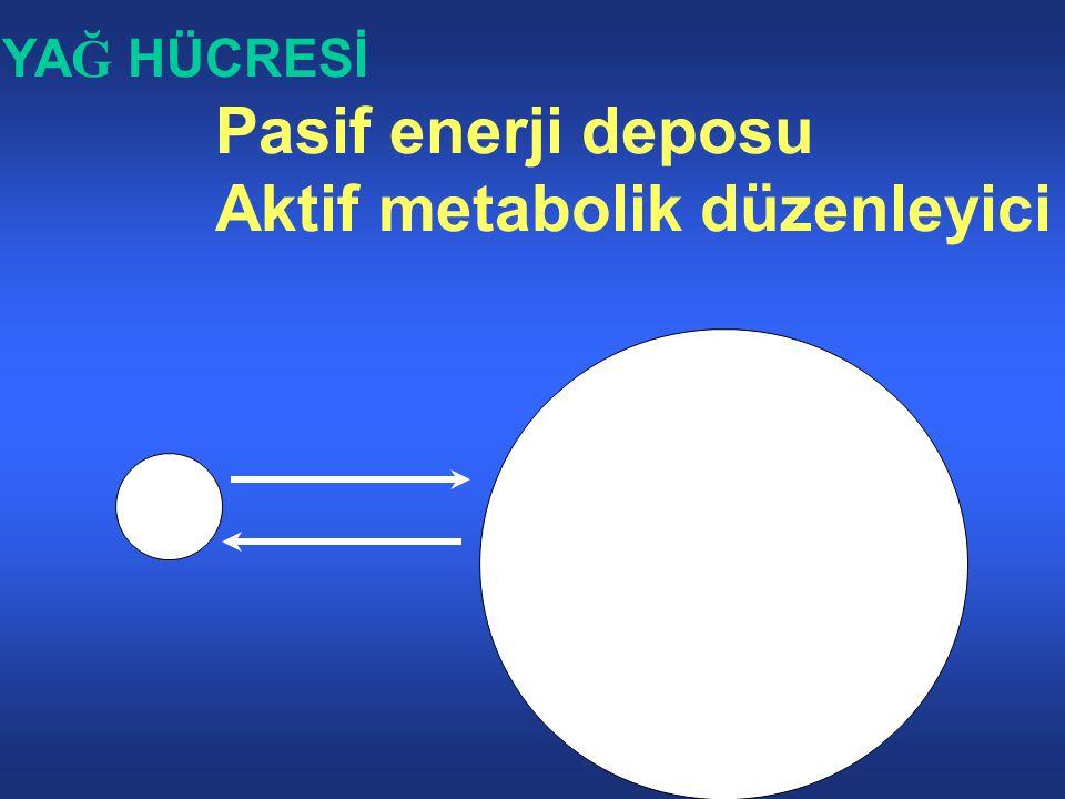 Aktif metabolik düzenleyici